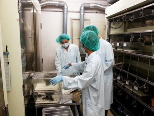 動物実験施設